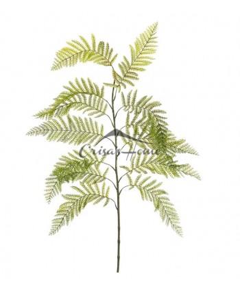 Fern Green Branch