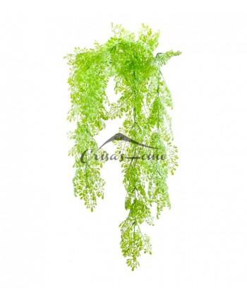 Ramura Green