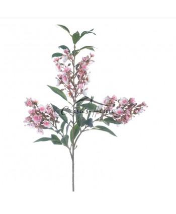 Adelfa Flower
